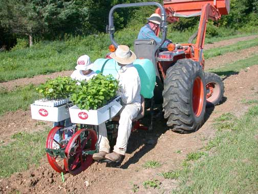 tobacco planter machine